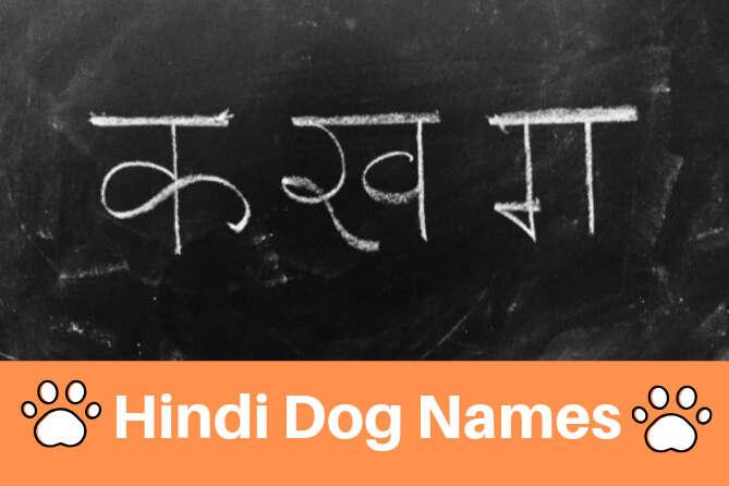 Top 100 Hindi Dog Names | Best Dog Names in Hindi
